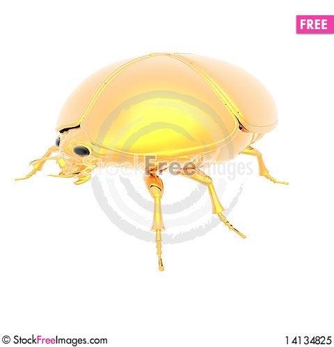 Free Golden Bug Royalty Free Stock Photo - 14134825