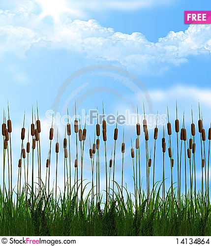 Free Green Grass Stock Images - 14134864