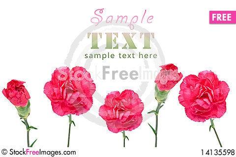 Free Purple Carnations Royalty Free Stock Photos - 14135598