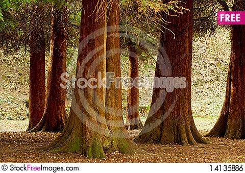 Free Park Trees Royalty Free Stock Image - 14135886