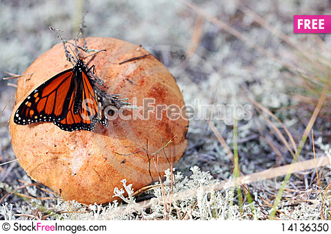 Free Mushroom With Butterfly Stock Photo - 14136350