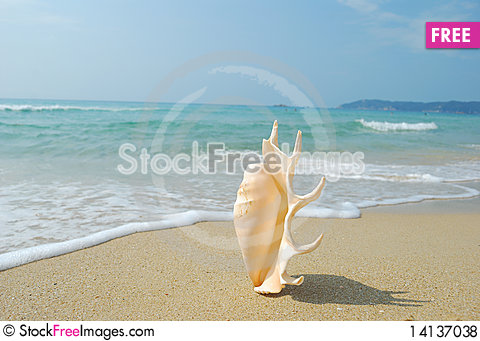 Free Conch Royalty Free Stock Photos - 14137038