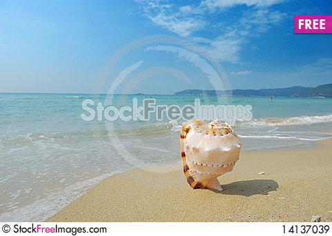 Free Conch Royalty Free Stock Images - 14137039