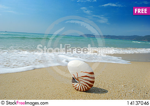 Free Conch Royalty Free Stock Image - 14137046