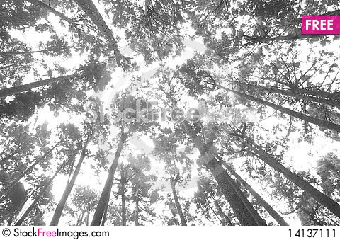 Free Forest Stock Image - 14137111