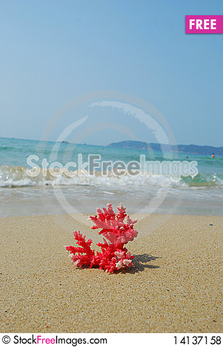 Free Coral Royalty Free Stock Photos - 14137158