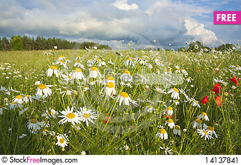 Free Field Of Flowers, Summer Stock Image - 14137841