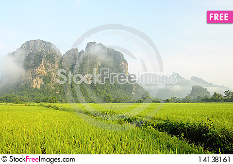 Free Rice Fields Stock Image - 14138161
