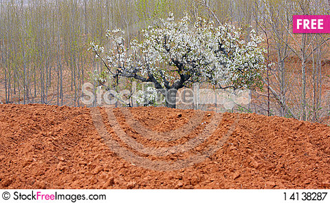 Free The Pear In Farmland Royalty Free Stock Photography - 14138287