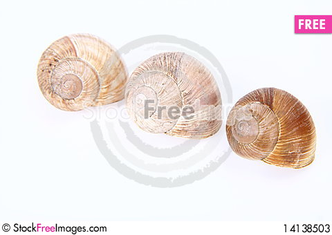 Free Snail Shells Stock Photos - 14138503