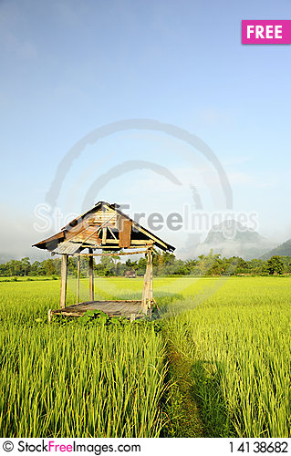 Free Rice Fields Stock Photography - 14138682