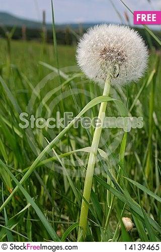 Free Flowery Meadow 2 Royalty Free Stock Photo - 14139465
