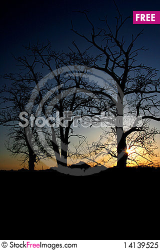 Free Trees Royalty Free Stock Photo - 14139525