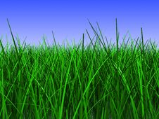 Free Grass Meadow Stock Images - 14130664