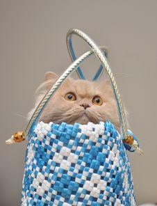 Free Persian Cat Stock Images - 14130934