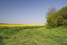 Free Yellow Field Stock Photo - 14131240