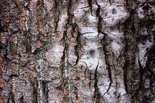 The Bark Of The Birch Stock Photos