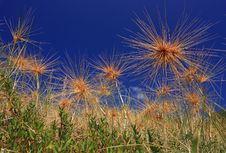 Free Dry Grass Field Against Blue Sky Royalty Free Stock Images - 14132609