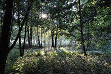 Free Wood Royalty Free Stock Image - 14132816