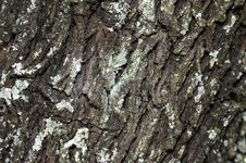 Free Tree Bark Stock Photos - 14133823