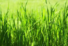 Green Grass In Sunlights Royalty Free Stock Photos