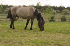 Free Grey Horse Stock Photo - 14135250