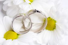 Free Wedding Rings Stock Photography - 14136862