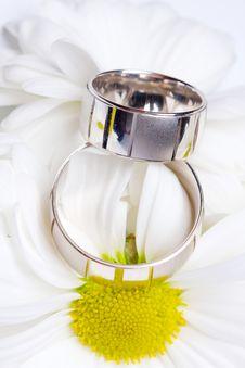 Free Wedding Rings Stock Photos - 14136913