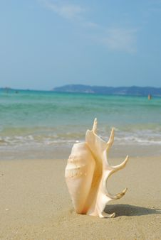 Free Conch Stock Photography - 14137042