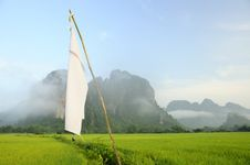 Free Rice Fields Royalty Free Stock Photography - 14137867