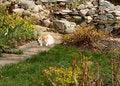 Free Sunny Garden Cat Royalty Free Stock Image - 14149526