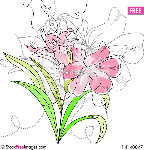 Free Lily Flowers Royalty Free Stock Photography - 14140047