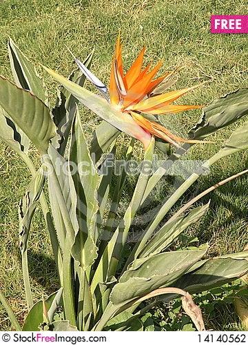 Free Orange Flower Stock Photography - 14140562