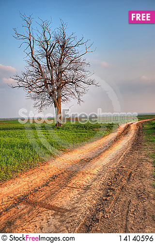 Free Mountain Landscape With Lonely Tree And Road Royalty Free Stock Image - 14140596