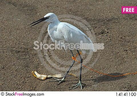 Free Bird Stock Photo - 14141100