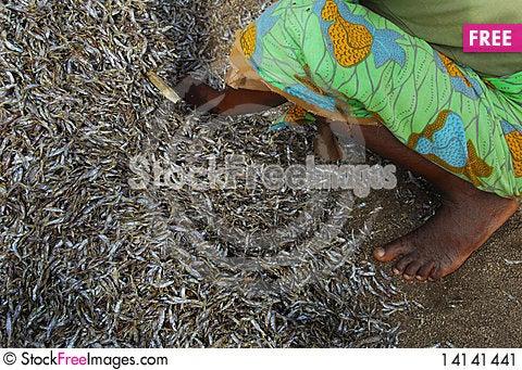 Free Africa Stock Image - 14141441