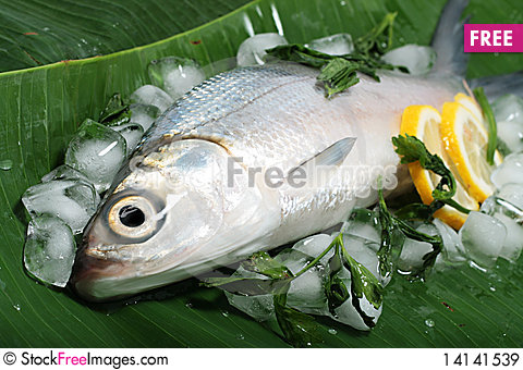 Free Fresh Sea Bass On Banana Leaf Royalty Free Stock Images - 14141539