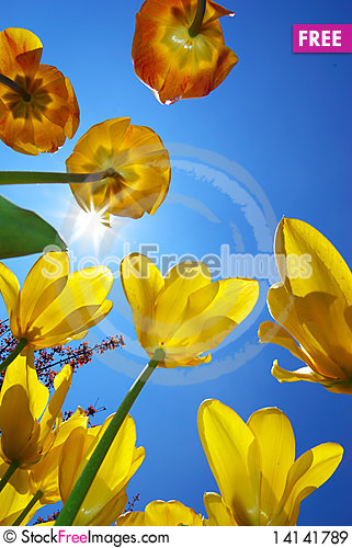 Free Tulips In Sky Royalty Free Stock Images - 14141789