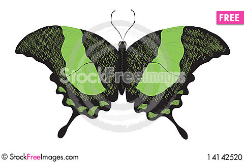 Green swallowtail butterfly Stock Photo