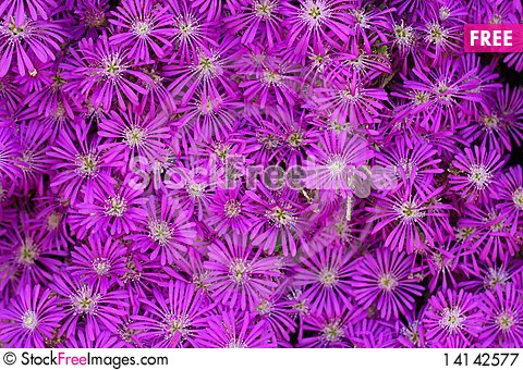 Free Pink Flowers As Background Royalty Free Stock Photography - 14142577