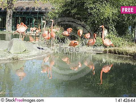 Free Flamingos Stock Images - 14142644