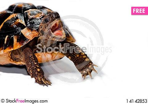 Free Turtle Stock Photos - 14142853