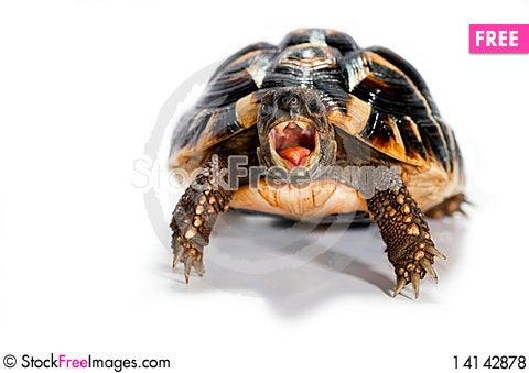 Free Turtle Royalty Free Stock Photos - 14142878