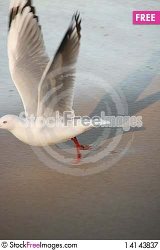 Free Bird Royalty Free Stock Photography - 14143837