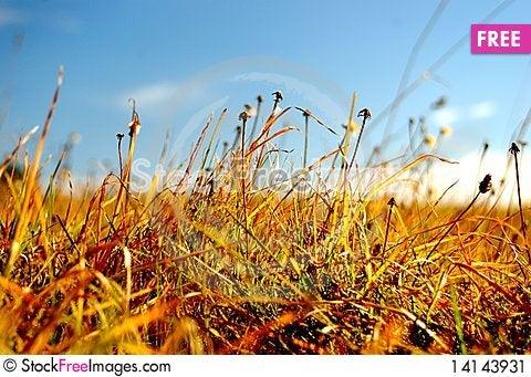 Free Grass Stock Image - 14143931