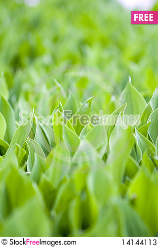 Free Fresh Green Leafs Stock Photos - 14144113