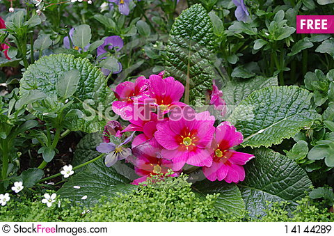 Free Flowers In A City Royalty Free Stock Images - 14144289