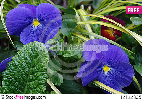 Free Garden Flowers Royalty Free Stock Photo - 14144305