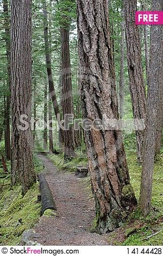 Free North Cascades National Park Royalty Free Stock Photos - 14144428