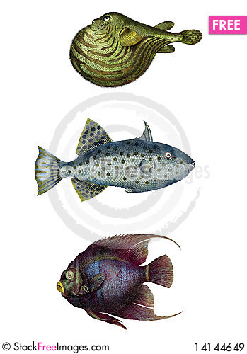 Free Hand-Colored Fish Etchings Royalty Free Stock Images - 14144649